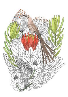 Adult Colouring Page Sugarbird on Protea Flowers Protea Art, Protea Flower, Doodle Coloring, Adult Coloring, Coloring Pages, Botanical Illustration, Botanical Art, Wildflower Drawing, Circle Art