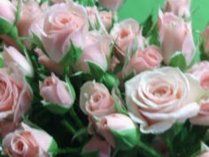 Spray Roses Available at Greenleaf Wholesale Florist  Phoenix (602) 264-3781 www.greenleafwholesale.com