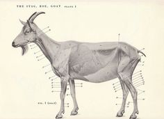 Image result for animal photos side view