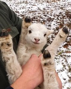 cute animals Goats Can Understand Human Expressions And Are Drawn To Smiling Faces Happy Animals, Animals And Pets, Funny Animals, Wild Animals, Farm Animals, So Cute Baby, Cute Babies, Adorable Puppies, Baby Animals Pictures