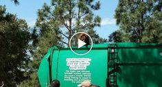 Urso Viaja Em Grande Estilo Em Cima De Camião Do Lixo