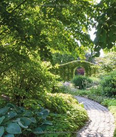 Festuca cinerea blauschwingel sorten und andere arten for Gartengestaltung joanna