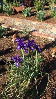 Brick and stone pathway thru the Spring garden