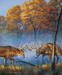 Wildlife Paintings, Wildlife Art, Deer Art, Moose Art, Male Deer, Deer Wallpaper, Deer Drawing, Deer Pictures, Deer Pics
