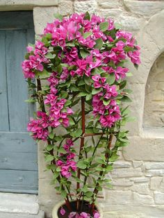 Bougainvillea by Pascale Garnier - $37.00 : Swan House Miniatures DIY, For dollhouse miniature building and finishing