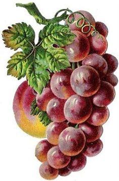 Grape Painting, Fruit Painting, China Painting, Fruit Illustration, Botanical Illustration, Watercolor Fruit, Watercolor Paintings, Cute Backgrounds For Iphone, Basket Drawing