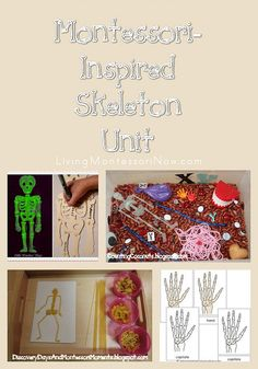 Montessori Monday – Montessori-Inspired Skeleton Unit: Roundup post with printables and activities for human skeleton unit study. Also includes some resources for vertebrate skeletons.