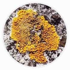 Circle - Organic Matter - 415 - Random Series - Diane Manton - 3rd October 2014 On October 3rd, October 2014, Organic Matter, Science Nature, Acai Bowl, Food, Acai Berry Bowl, Essen, Meals