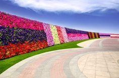 Wanderlust Wednesday: Dubai Miracle Garden