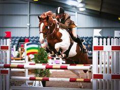 Umenno - Coloured Dutch Warmblood Stallion