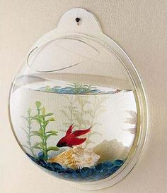 Wall Hanging Fish Tank! This is neat!