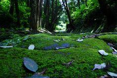 龍門司坂 | 自然・風景 > 森林の写真 | GANREF