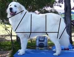 Espinay - Grooming Your Great Pyrenees