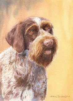 """German Wirehaired Pointer Head Study II"" A Limited Edition Print"