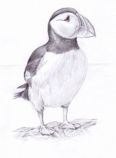 puffin drawing - Google Search