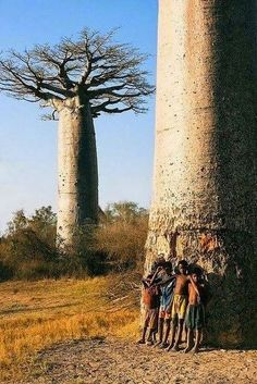 Children & Baobab tree in Madagascar, Africa Beautiful World, Beautiful Places, Beautiful Kids, Places Around The World, Around The Worlds, Baobab Tree, Out Of Africa, Thinking Day, Tree Forest