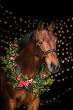 116 best christmas horses images in 2019 christmas horses horses christmas animals