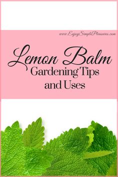 Lemon Balm Gardening Tips and Uses