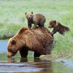 Image in Animals collection by קคยl Ŧгคภςเร on We Heart It Animals And Pets, Baby Animals, Cute Animals, Animal Babies, Beautiful Creatures, Animals Beautiful, Love Bear, Wildlife Nature, All Gods Creatures
