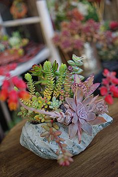 Rock Succulents~pics on this blog are great but all the descriptions are in Japanese  :(