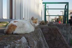 猫 ネコ ねこの日々   じぇいなすと、うちニャンズ+外猫いっぱい   ページ 4