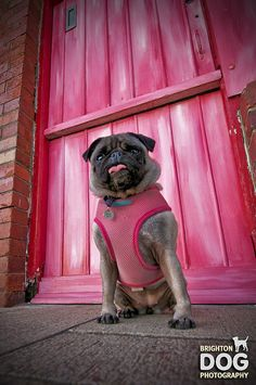 Lifeguard Dog  in pink :)