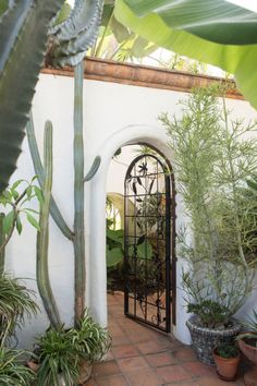 would like to add a wrought iron trellis to the front open area to create a green/living wall. I also love mixing banana trees and the succulents