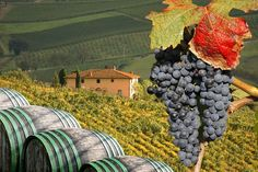 Sample the superb Chianti which is grown in the Tuscan region of Italy