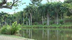 Beautiful nature in Paradise in Cali, Colombia ( Babilla´s Lake )