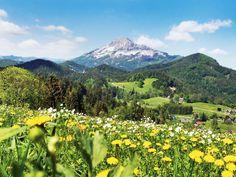 Der 1.893 m hohe Ötscher erhebt sich so markant über das Voralpenland.