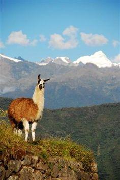 Inka-Inka trail in Peru - our next international destination!