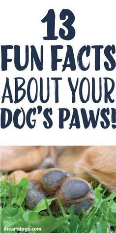 13 Fun Facts About Your Dog's Paws