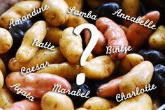 Quelle pomme de terre pour la purée, les frites ou la soupe ? «  Cookismo | Recettes saines, faciles et inventives