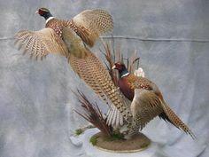 National award-winning taxidermist in Aberdeen, South Dakota. Premium ringneck pheasant mount taxidermy and much more. Taxidermy Decor, Taxidermy Display, Bird Taxidermy, Pheasant Mounts, Pheasant Hunting, Hunter Guide, Ring Necked Pheasant, Deer Skulls, Game Birds