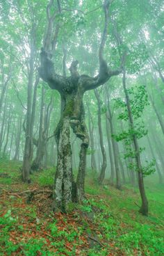 Weird trees - 25 Impressive Photos From Around The World Weird Trees, Dame Nature, Tree People, Fotografia Macro, Unique Trees, Unique Art, Nature Tree, Tree Forest, Land Art