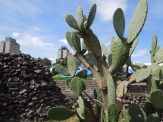 Unidad Habitacional Nonoalco Tlatelolco. Tres culturas. Foto: Perla Oropeza.