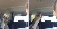 Cão faz sucesso ao dançar em carro aos embalos de Tina Turner
