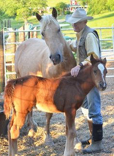 Our National Day of the Horse arrives on Sunday. In 2004 Congress set aside a day to honor the most significant animal to the building of the history of our nation. Horses have served in our wars, ...