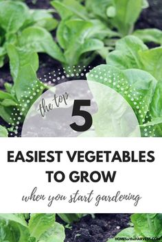 The Top 5 Easiest Vegetables to Grow When You Start Gardening   Home for the Harvest