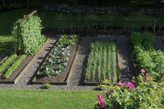 Neat vegetable garden | Beautiful