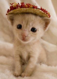 Why so cute <3