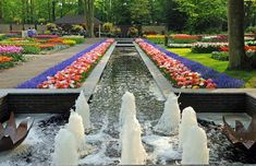 The bulbs of Keukenhof are re-planted each year according to the current trends and in collaboration with a number of gardening magazines