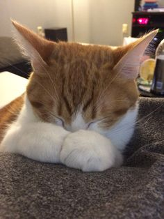 When you honestly need a nap in order to continue functioning normally. | 21 Times Cats Were You IRL
