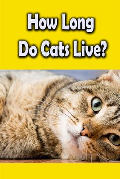 120 Cat Lovers Ideas Cat Lovers Cats All About Cats