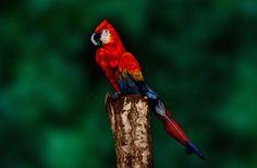 Det här är inte en papegoja. Kan du se vad det är? #kul #udda #humor #funny #amazing #cool http://www.obsid.se/livsstil/det-har-ar-inte-en-papegoja-kan-du-se-vad-det-ar/