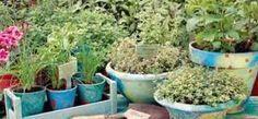 ΠΟΤΕ ΚΑΙ ΠΩΣ ΘΑ ΦΥΤΕΨΕΤΕ ΒΟΤΑΝΑ Flowers, Plants, Gardening, Jars, Lawn And Garden, Plant, Royal Icing Flowers, Flower, Florals