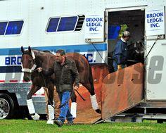 ( October 27, 2015) American Pharoah being led off the van at Keeneland by asst. trainer Jim Barnes... © Rick Samuels/The Blood-Horse
