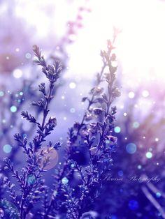 Blue Bokeh by Floreina-Photography on DeviantArt