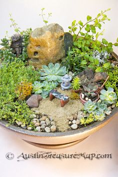 "Grandma's Zen Fairy Garden - just 12"" across, and portable so she can put it by her bed or by her chair on the deck.  In the back is Sedum Coral Carpet, Hot and Spicy Oregano, and Russian Oregano.  The little polymer clay rake I made is 1.5"" long and can be used to tidy up the sand or knock bits of dirt out of leaves."
