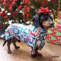 Best Christmas gift to give to any dachshund and dog owner, lover. Wrap a dachshund like a present Dachshund Funny, Dachshund Puppies, Dachshund Love, Funny Dogs, Cute Puppies, Cute Dogs, Daschund, Lab Puppies, Dapple Dachshund